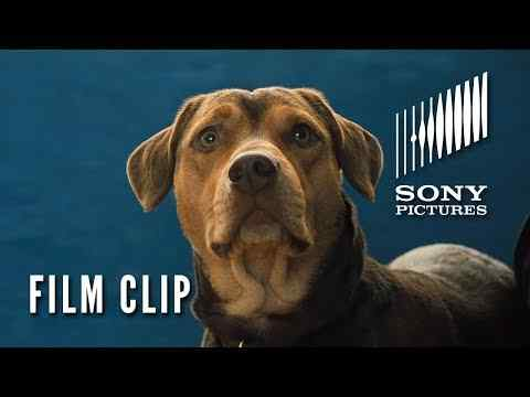 A Dog's Way Home - Clip